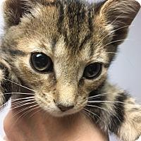 Adopt A Pet :: Matthew - Medina, OH