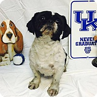Adopt A Pet :: Elvis - Hazard, KY