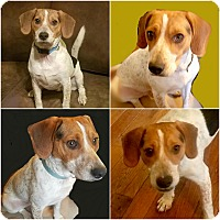 Adopt A Pet :: PARKER - Findlay, OH