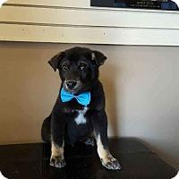 Adopt A Pet :: Cosmo - Duchess, AB