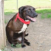 Adopt A Pet :: SASHA - Poteau, OK