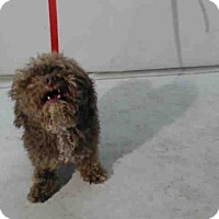 Adopt A Pet :: PRADA - Orlando, FL