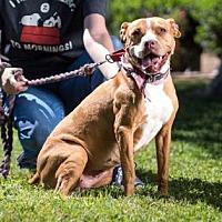 Adopt A Pet :: FRIDA - Kyle, TX