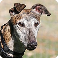 Adopt A Pet :: Mark - Santa Rosa, CA