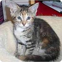 Adopt A Pet :: Bravegirl - Jenkintown, PA