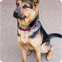 Adopt A Pet :: Delpha - Portland, OR