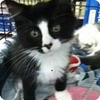 Adopt A Pet :: Einstein - Riverside, RI