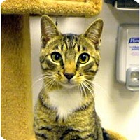 Adopt A Pet :: Davidson - Encinitas, CA