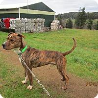 Adopt A Pet :: Julius - Tillamook, OR