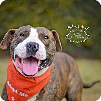 Adopt A Pet :: Arby - Fort Valley, GA
