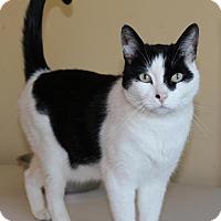 Adopt A Pet :: Thomas - Sacramento, CA