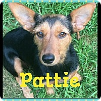 Adopt A Pet :: Pattie - bridgeport, CT