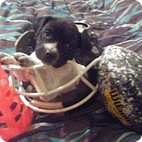 Adopt A Pet :: Fraser - Burleson, TX