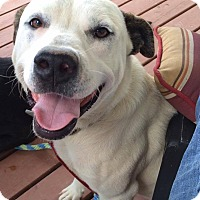 Adopt A Pet :: Rugar in CT - Manchester, CT