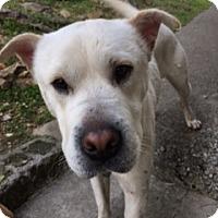 Adopt A Pet :: Kasper - Birmingham, AL