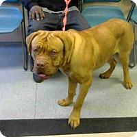 Adopt A Pet :: ORSO - Louisville, KY