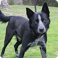 Adopt A Pet :: Rocky - Conway, AR