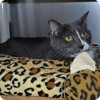 Adopt A Pet :: Tracy - Wheaton, IL