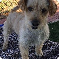 Adopt A Pet :: Buddy - Temecula, CA