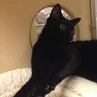 Adopt A Pet :: Sylvie - Cypress, TX