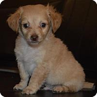 Adopt A Pet :: Herbs: Parsley - Palo Alto, CA
