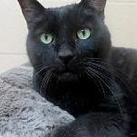 Adopt A Pet :: OPAL - Little Rock, AR