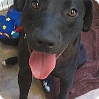 Adopt A Pet :: Tasha - Cambridge, MD