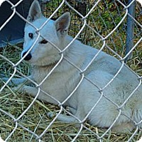 Adopt A Pet :: Gypsy - Frankfort, KY