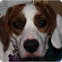 Adopt A Pet :: Tanner - Toronto/Etobicoke/GTA, ON