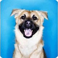 Adopt A Pet :: Augie - Scottsdale, AZ
