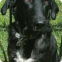 Adopt A Pet :: Renior URGENT - Plainfield, CT