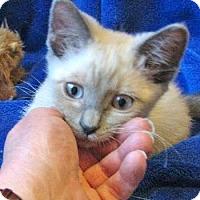 Adopt A Pet :: Asher Bear - Davis, CA