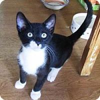 Adopt A Pet :: Ollie - Pasadena, CA