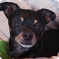 Adopt A Pet :: Buddy - San Diego, CA