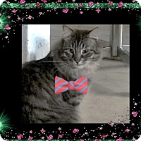 Adopt A Pet :: Leonardo - london, ON