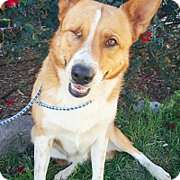 German Shepherd Dog Mix Dog for adoption in Fredericksburg, Texas - Zara