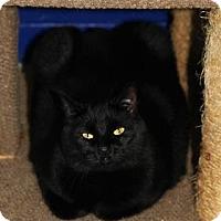 Adopt A Pet :: Sirius - Mission, KS