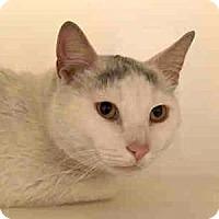 Adopt A Pet :: Quarles - Fairfax, VA