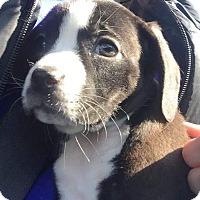 Adopt A Pet :: Aspen - Broken Arrow, OK