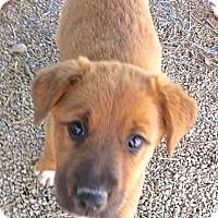 Adopt A Pet :: Mandi - Lakewood, CO