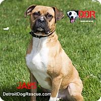 Adopt A Pet :: Jabs - St. Clair Shores, MI