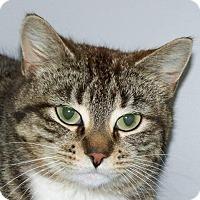 Adopt A Pet :: Helen - Kalamazoo, MI