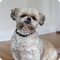 Adopt A Pet :: Chanel - Rigaud, QC
