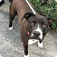 Adopt A Pet :: Lake - Sacramento, CA