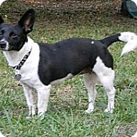 Adopt A Pet :: Esme - Duluth, GA
