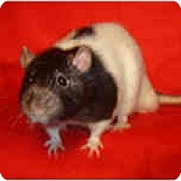 Adopt A Pet :: Jarrett - Winner, SD