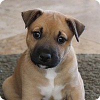 Adopt A Pet :: Jerry - La Habra Heights, CA
