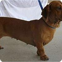 Adopt A Pet :: Peggy - San Jose, CA