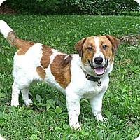 Adopt A Pet :: Flash - Mocksville, NC