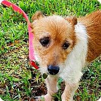 Adopt A Pet :: DAISY - Terra Ceia, FL